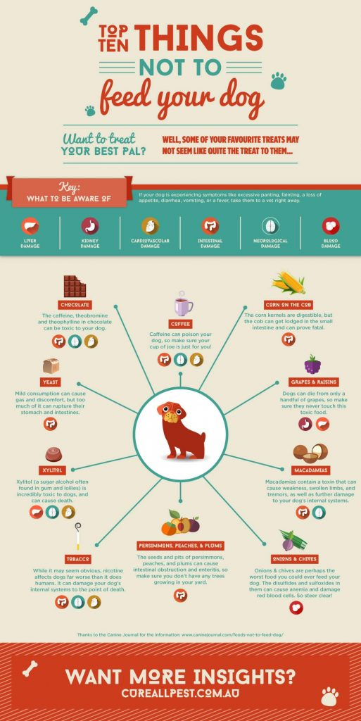 things-not-to-feed-your-dog-graphic-design-infographic-513x1024